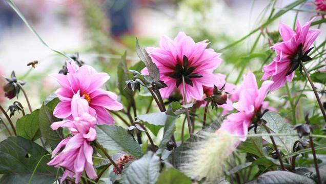 Blumen in der Innenstadt