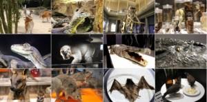 Lebewesen Bildergalerie auf Seejey