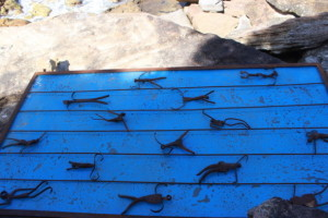 Sculptures by the Sea : Schwimmer