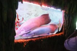 Suoi Tien Aquarium