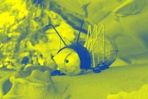 Pop Art Effekt in Blau-Gelb bei Picasa
