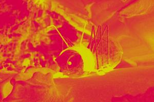 Pop Art Effekt in Rot-Gelb