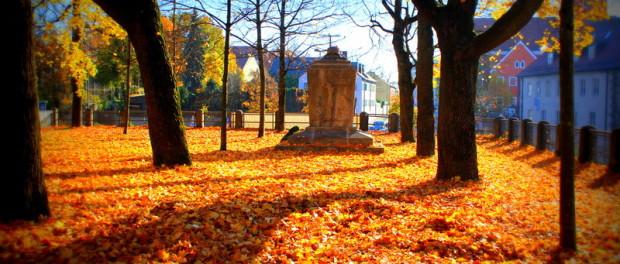 Herbstblätter im November