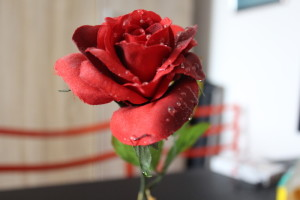 Rose an Valentinstag